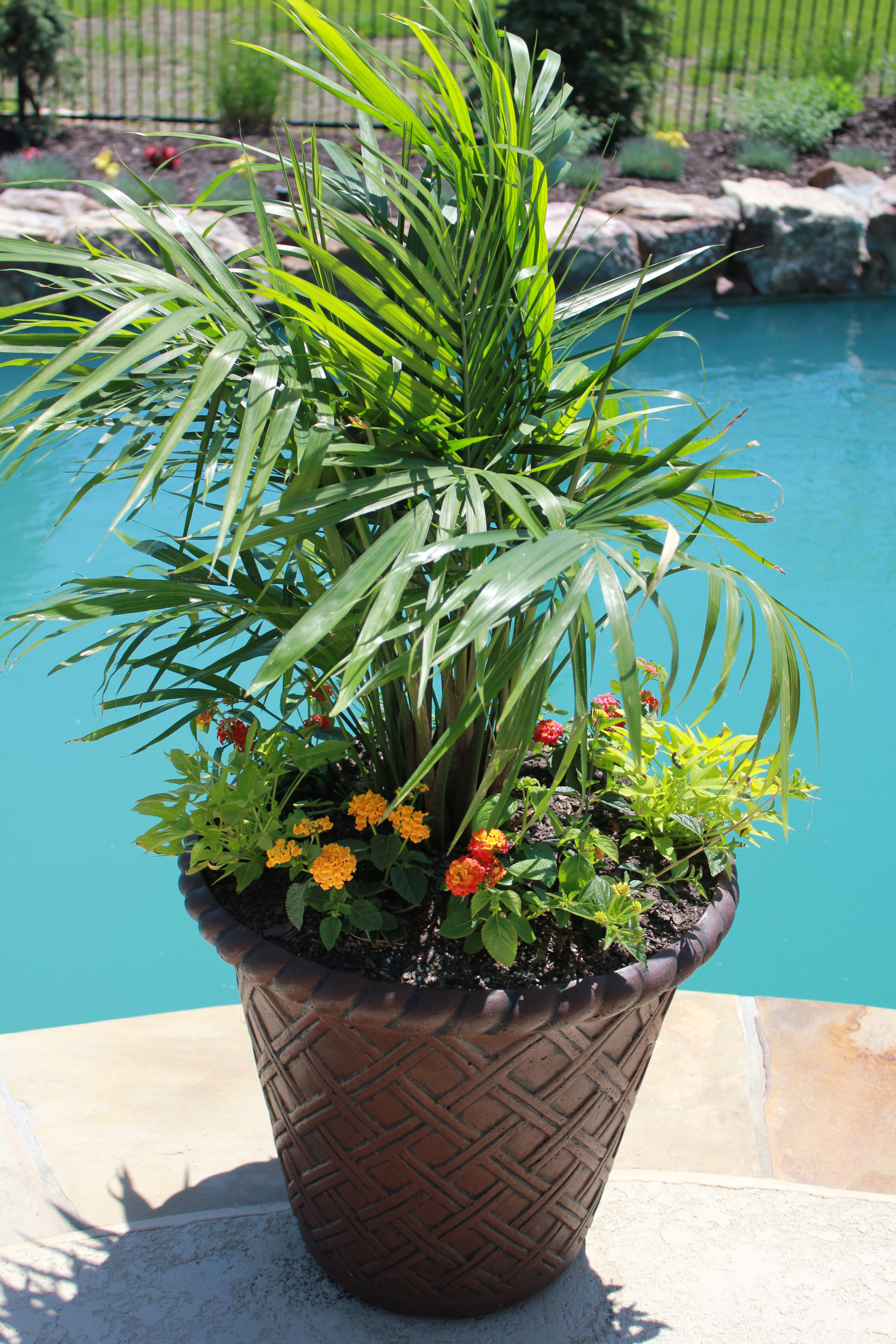 Container Gardening Part 1 - JOYFUL scribblings on Tree Planting Ideas For Backyard id=58998